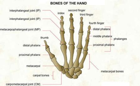 how to make your hand iron bone